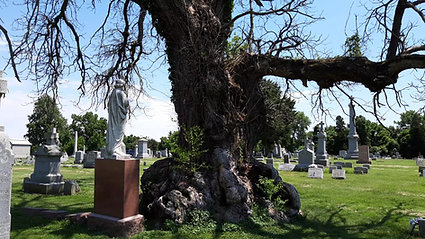 A Witch's Tree