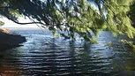 木々たちが 風と水とダンス