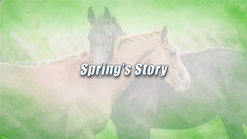 Spring's Equine Story