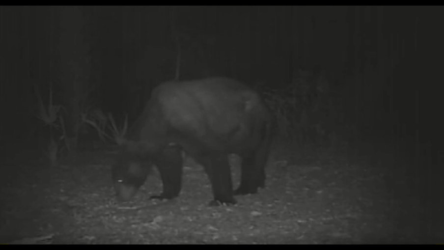 CAPT JB's PANACEA WILDLIFE RANCH LIVE CAMS