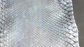 Metallic Gold Python