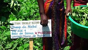 Kesho Congo Cowpea fied in Luvungi.