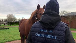 GAMMARTH - Haras de Chantemerle - Étalon pour la saison 2021