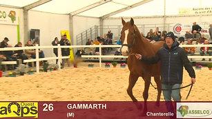 26 Gammarth