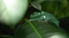 frogg sleepy 3