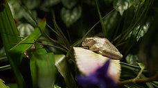 frogg sleepy 2