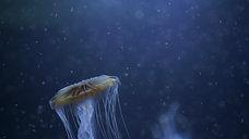 dark detail jellyfish 5