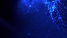 dark detail jellyfish 7