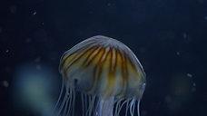 dark detail jellyfish 6