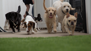 Dog Day Care at No Leash Needed