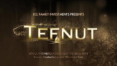 Tefnut Mixed Media Logo