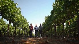 Sangiacomo Wines Brand Overview