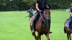 Yearlings FIRST Ride