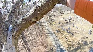 Henry's Tree Service