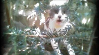 Part 2..Life through my cat eyes..