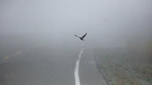 Пусть летят