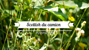 Scottish du Camion(alc)