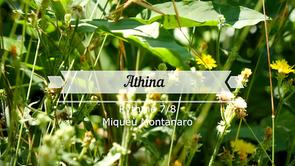 Athina - Clavier Heim