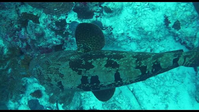 Moalboal | Scuba Diving Paradise