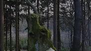Inspektion Wald