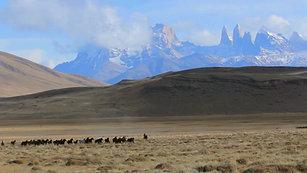 Patagonia Trailer