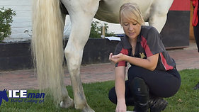 Applying Iceman Horse's To Hind Legs