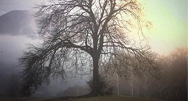 TREES OF SHAME - Switzerland's Crimes Against Children