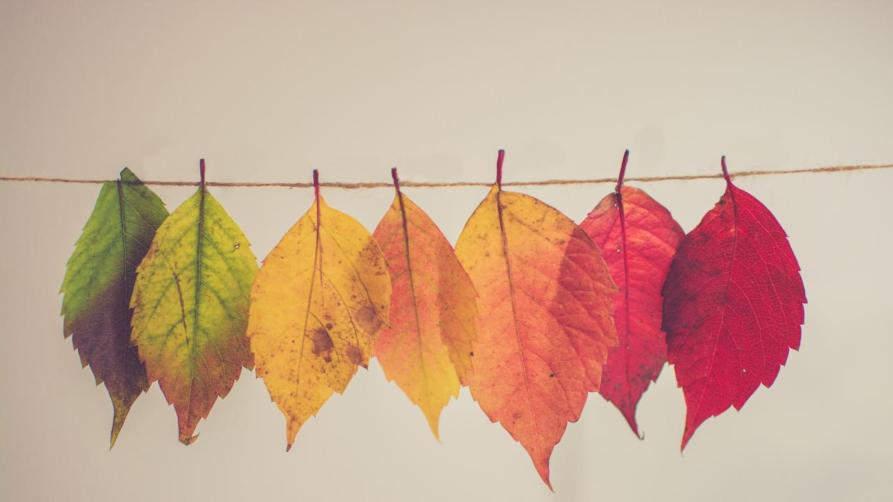 Autumn Yin & Traditional Chinese Masterclass