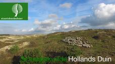 Schaapskudde Hollands Duin HD