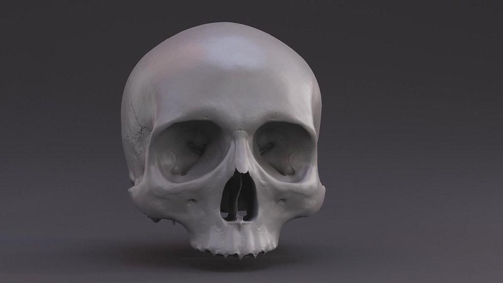 Skull_Clay