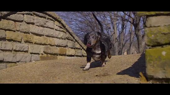 Trailer_The Ducks & Dogs of Glen Lakes