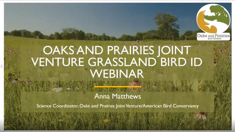 Grassland Bird ID Webinar
