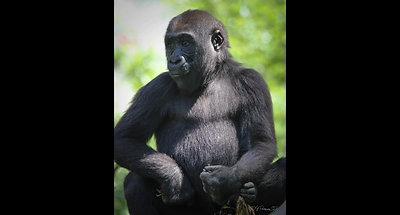 S D Zoo 8 28 18