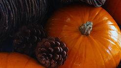 SeedMarathon Mealies, pumpkins, melons, etc