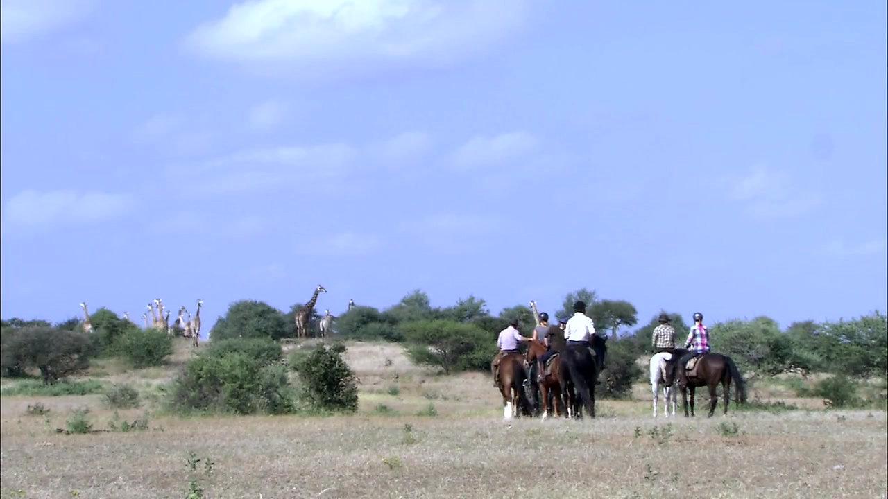Limpopo Horse Safari.  Mashatu Game Reserve
