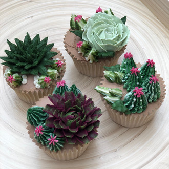 **NEW for 2019** The Succulent Collection