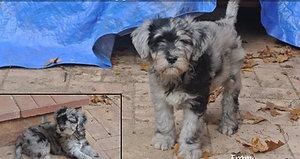 Puppies Oct 2017 A litter 9 weeks