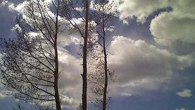 Living Skies Tree Service Time Lapse