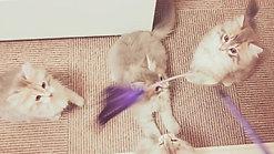猫じゃらし🐈