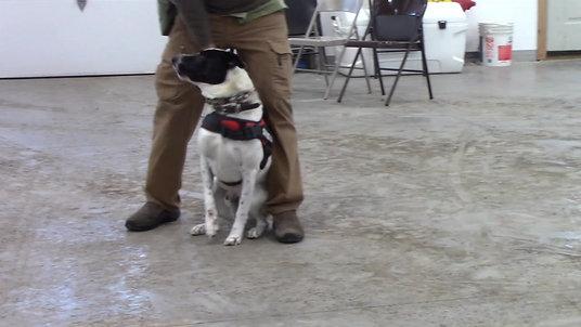 Hank's Training