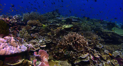 Save coral