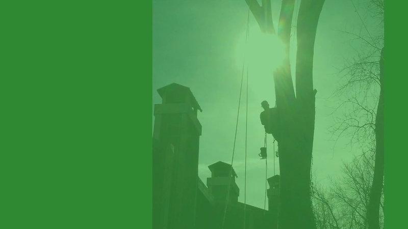 Reno Tree Service