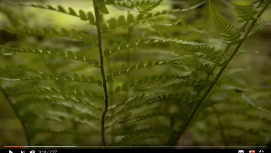 Cascades et Purnat s'associent pour une nature libre de déchets