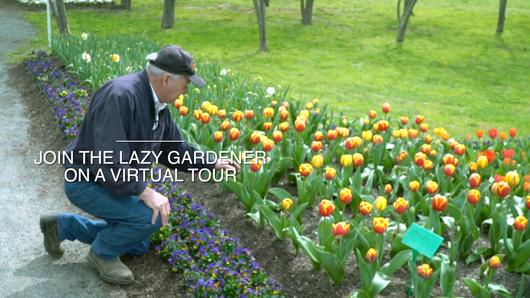Join the Lazy Gardener - 2020 Teaser