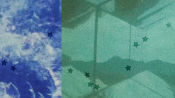 imagem e semelhança | Stefano Mancuso, Sidarta Ribeiro etc