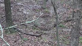 Triple A Bow Hunt