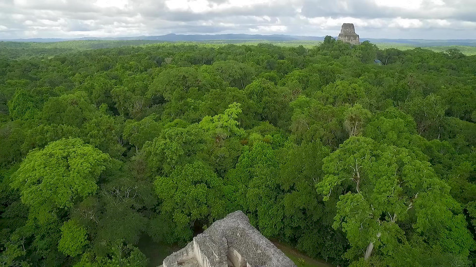 Rainforest, Reefs and Ruins