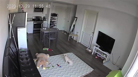 Pet monitoring camera
