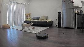 Pet monitoring
