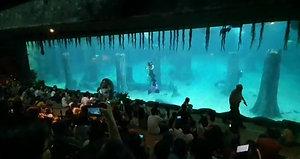 Singapore Zoo Performance